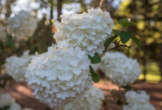 clements-keels-garden-11_35388008025_o
